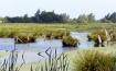 meerbruch-schwimmende-wiesen-im-westen-des-steinhuder-meeres-natur-3-steinhuder-meer-tourismu