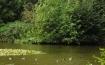 klosterwaldteich-natur-2